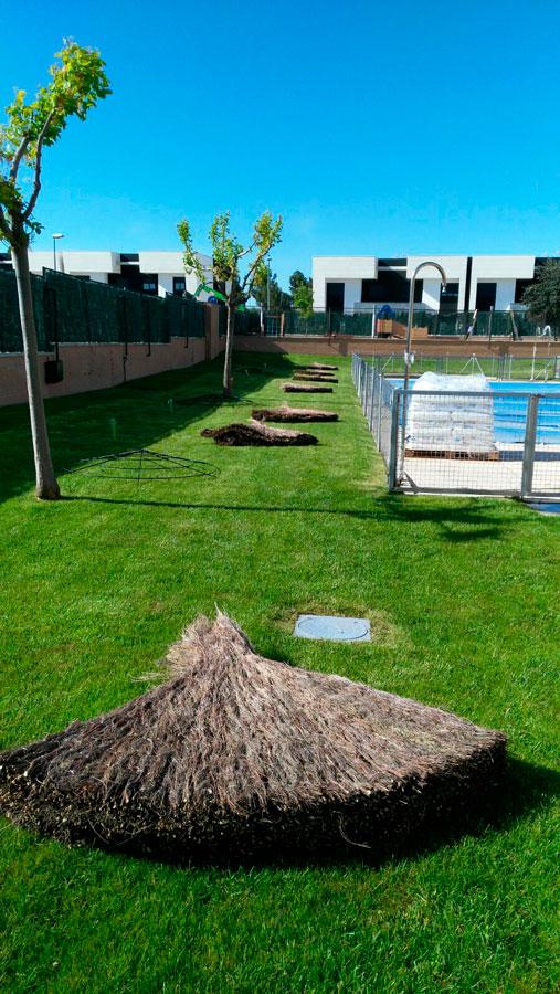 Sombrillas de Brezo para Jardín con Piscina en Madrid